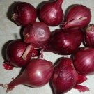 10 Red Pearl Onion Bulbs, Organic, Heirloom, Rare #MTV02