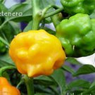 10 PETENERO Hot Pepper Seeds,Very Hard To Find ,from Guatemala; C.chinense. !