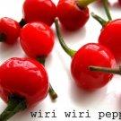 Wiri Wiri Pepper (1000 Seeds )Very Hard To Find - C. frutescens - From Guyana !