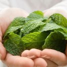 Organic Peppermint Leaf,Tea and more.- 1 oz Pack