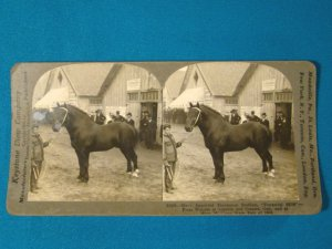 Percheron Stallion Durandal horse stereoview stereograph stereoscope card Keystone View antique 1909