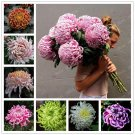 Chinese mum Seeds Rare Perennial Flower Seeds Indoor Bonsai Plants Chrysanthemum