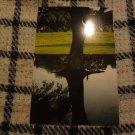 Photo Print: Tree Reflection 2
