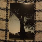Photo Print: Tree Reflection 3