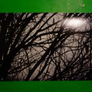 Photo Print: Branches