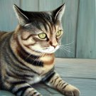 prtrait of pet cat 12x16 in. stretched Oil Painting Canvas Art Wall Decor modern002