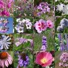 WILDFLOWER MIX PURPLE - 1 Oz Bulk Seeds