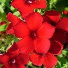 PHLOX RED Phlox Drummondii - 100 Seeds