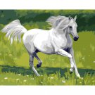 White horse in the field DIY Acrylic Paint by Numbers kit