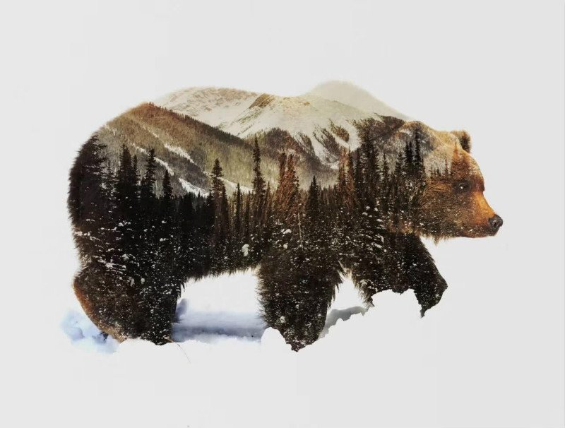 Bear DIY Acrylic - NOT AVAILABLE AT THE MOMETN