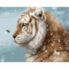 Tiger DIY Acrylic - NOT AVAILABLE AT THE MOMETN