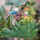 Danicing & Chirping Bird with Motion sensor