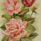 Antique Good Luck To You Postcard Pink and Red Roses Divided Unposted Embossed