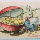 1911 Easter Postcard Humanized Rabbit Babysitting Baby Chicks Posted Divided