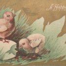 Antique Easter Postcard Chicks Egg Embossed Unposted Divided