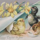 Antique Easter Postcard Baby Chicks and Duck Tucks Embossed Unposted Divided