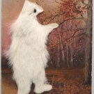 Antique 1907 Postcard Bear with Fur Phila Postcard Co Unposted Undivided Germany