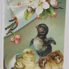 Antique Easter Postcard Baby Chicks Tucks Embossed Unposted Divided