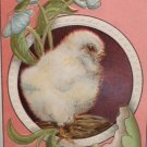 Antique Easter Postcard Chick Egg Embossed Unposted Divided