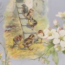 Antique Easter Postcard Baby Chicks Embossed Undivided Posted