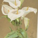 Antique Easter Postcard Lilies Embossed Posted Divided