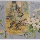 Antique Easter Postcard Baby Chicks Embossed Unposted Undivided