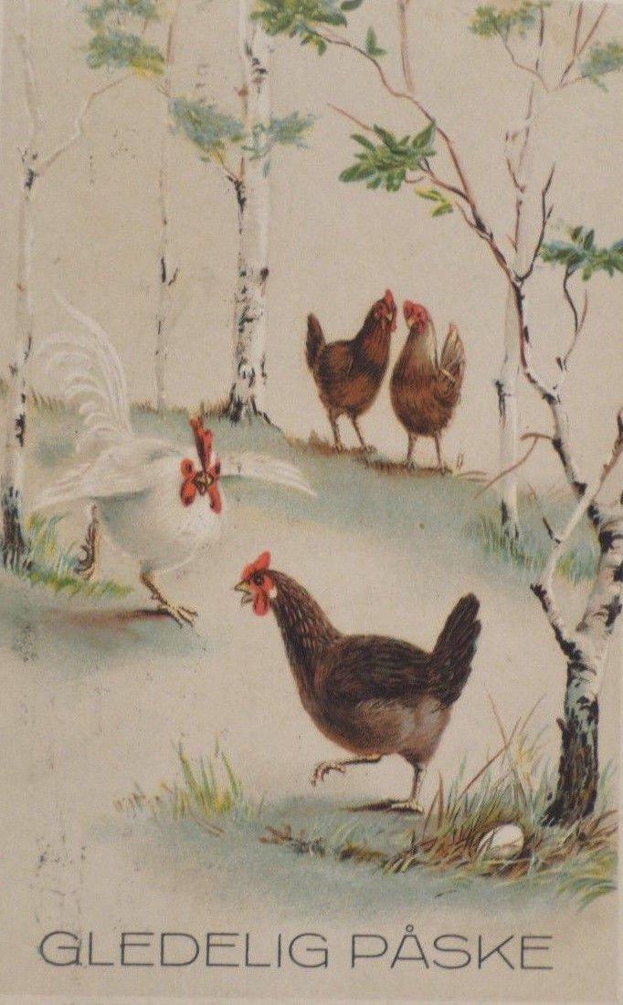 Antique Easter Postcard Hens Egg Embossed Posted Divided