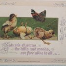 1913 Easter Postcard Baby Chicks Butterfly Embossed Unposted Divided