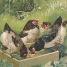 1906 Easter Postcard Hens Tuck & Sons Embossed Posted Divided