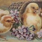 1919 Easter Postcard Chicks Basket Embossed Posted Divided