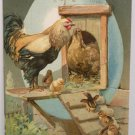 Antique Easter Postcard Rooster Hen Chicks Embossed Posted Undivided