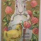 Antique Easter Postcard Rabbit Chick Egg Embossed Unposted Divided