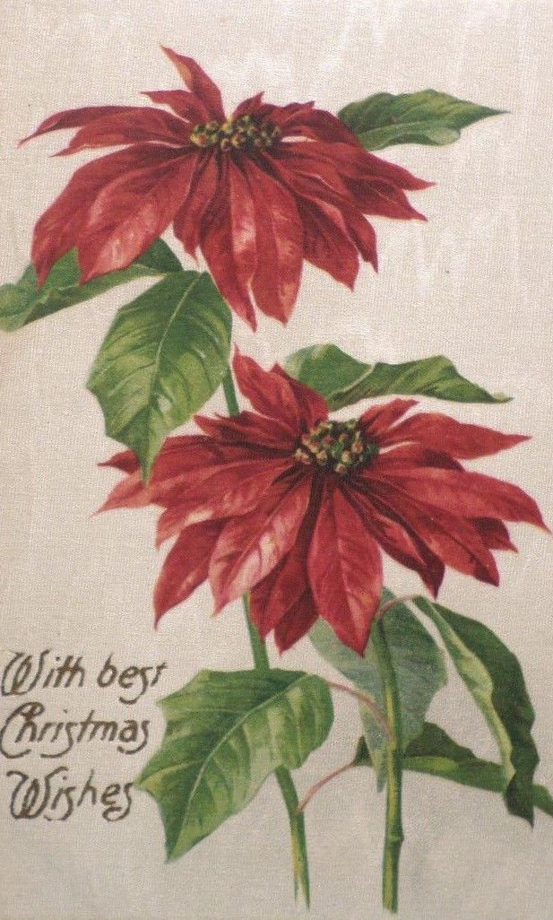 Antique Christmas postcard silk with red poinsettis unposted divided Germany