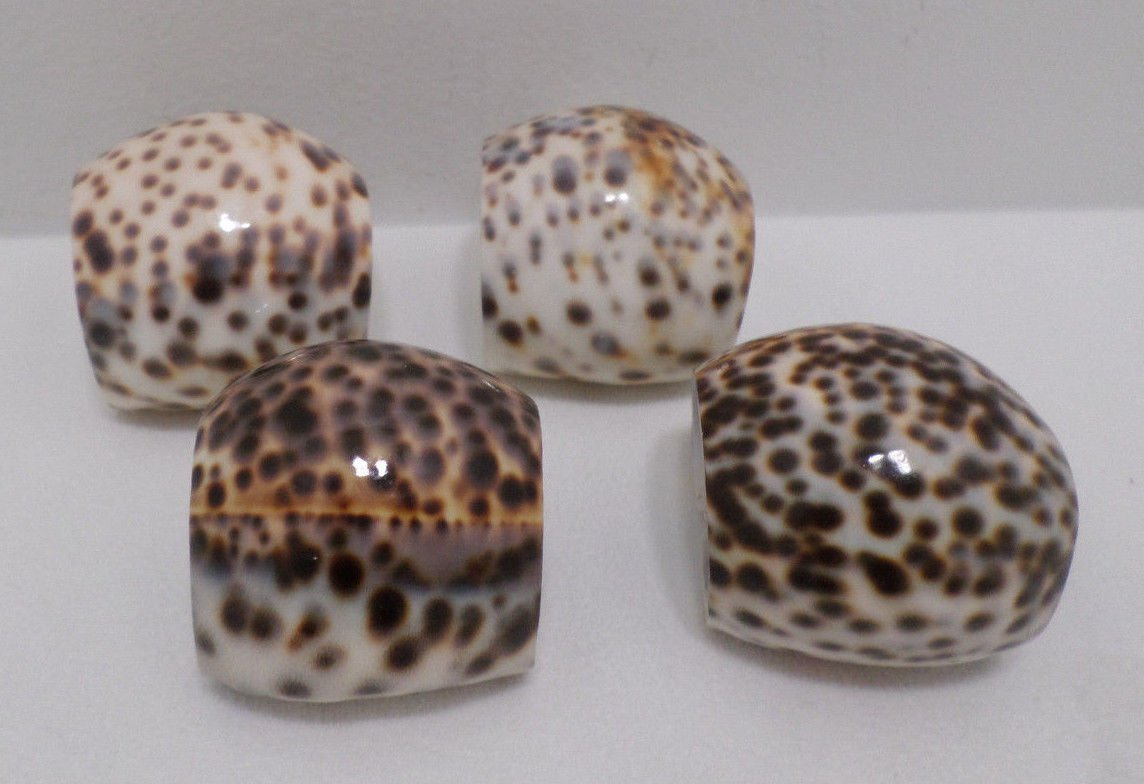 Napkin Rings made of Natural Cowrie Sea Shells by The Showcase Set of 4