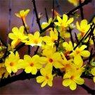 120pcs Winter Jasmine Seeds, Spring, Yellow Jasmine, Gold Belt (Jasminum nudiflorum Lindl.)