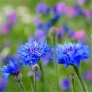 60pcs Cornflower Seeds,Symbolize happiness,(Centaurea cyanus L.)