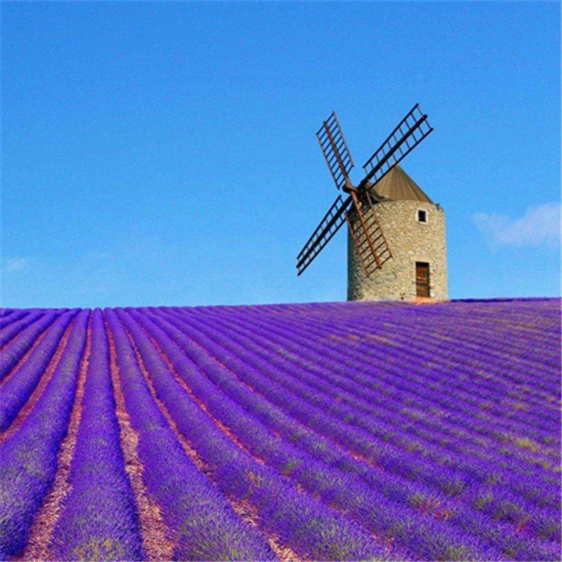 60pcs Romantic Lavender Seeds , Perfume Plant,Lavandula angustifolia Mill, Spirit Vanilla, Vanilla