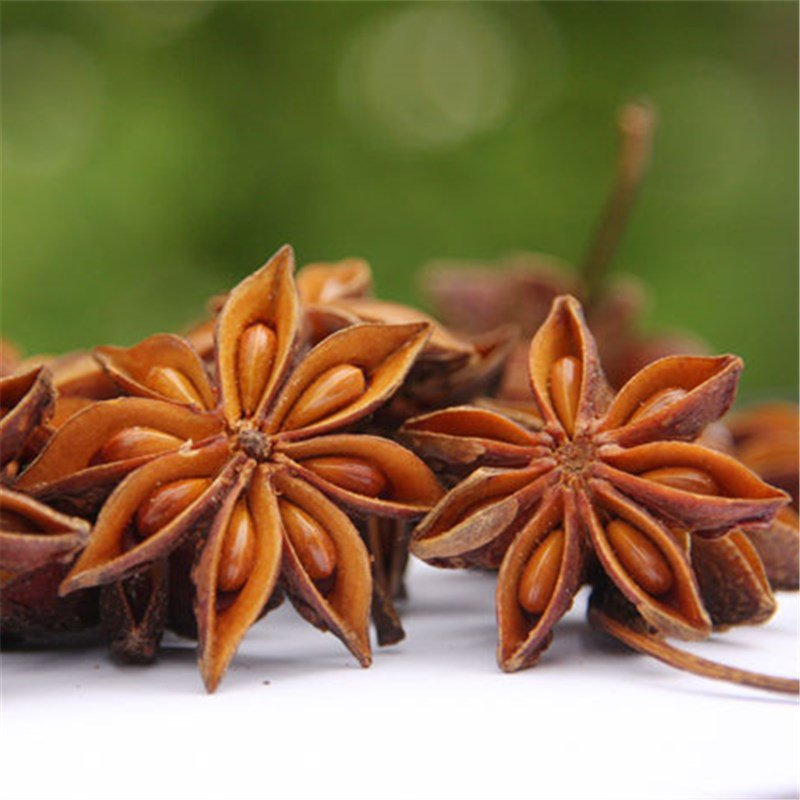 3pcs Anise Seeds, Fructus Anisi Stellati, Herb Plant Seeds, BaJiao, DaHuiXiang, (Illicium verum)