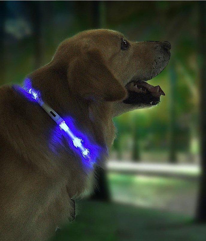 Waterproof LED Pet Collar  xl81-5001 Anti-lost Dog Tag