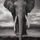 African Wildlife Elephant Drinking Gray Fabric Silk Posters And Prints 24x36 Inches