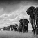 Way Of Life Sky Africa Elephant Wild Animal Art Silk Fabric Wall Poster Print Picture 24x36 Inches