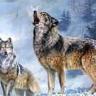Wolf In The Snow Wild Animal Fabric Silk Posters And Prints Home Decor Wall Art 24x36 Inch