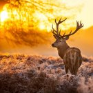 Sunset Deer Animal Landscape Fabric Silk Posters And Prints Home Decor Wall Art 24x36 Inch