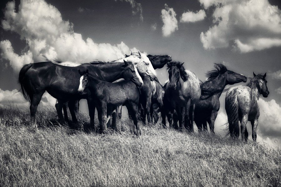 Black And White Horses Animal Fabric Silk Posters And Prints Home Decor Wall Art 24x36 Inch