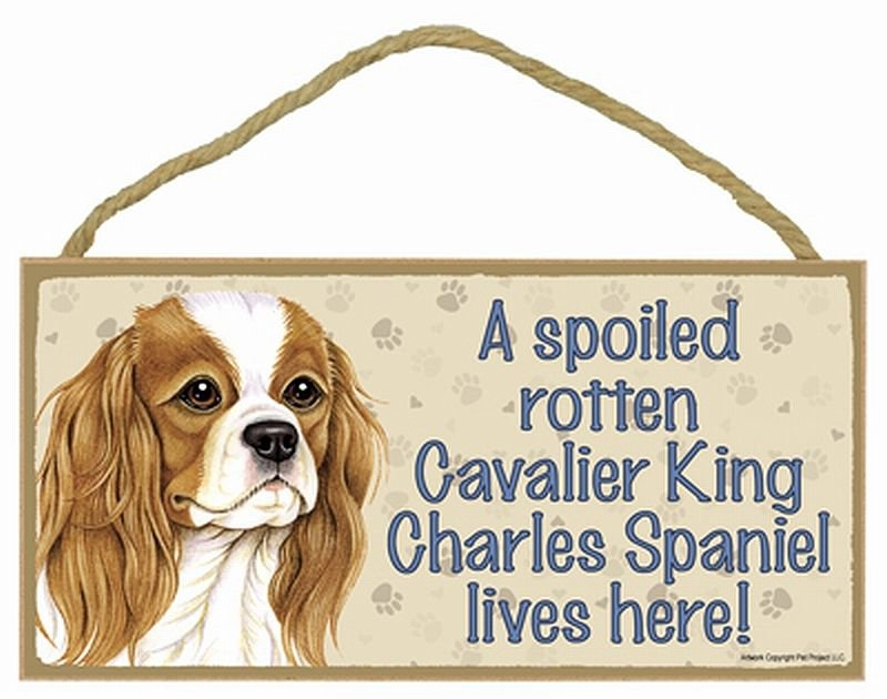 CAVALIER KING CHARLES  A Spoiled Rotten--Lives Here Wood SIGN/PLAQUE 5 X 10