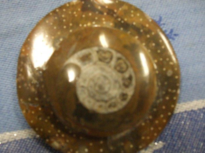 Ammonite         (EF01)