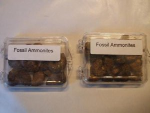 Ammonite Collection- Two Boxes