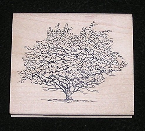 Rubber Stamp Mounted On Wood Apple Tree By Inkadinkado 96487P