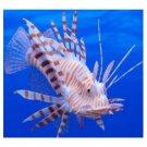 "Glowing LionFish Aquarium Novelty Decoration Ornament 5"" Long"