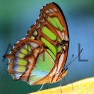 Photograph Wallpaper Digital Picture Image Desktop Background --- BUTTERFLY --- [Download]
